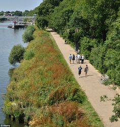 The Thames path footpath, pictured near Richmond, London, came second behind the Tijuca Forest in Rio de Janeiro in Brazil for the best place to walk and stroll.