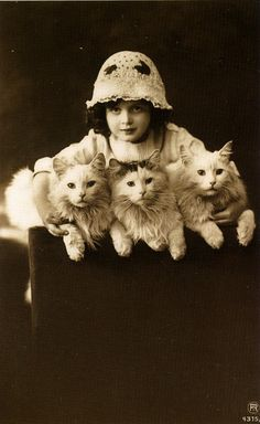 Antique kitties  I love the way cats look in vintage photos.  Turkish angoras?