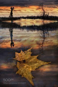 The last leaf by twwall
