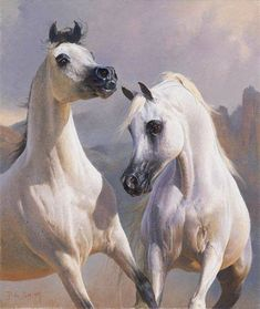 Two Beautiful Lively Arabians.