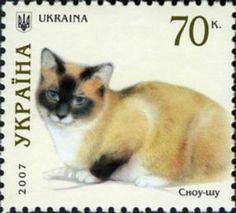 Snowshoe (Felis silvestris catus)