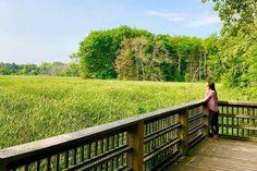 This hidden boardwalk near Toronto overlooks a lush marsh Garden Bridge, Conservation, Lush, Toronto, Paradise, Deck, Outdoor Structures, City, Outdoor Decor