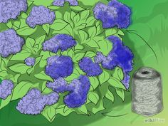 Imagen titulada Change the Color of Hydrangeas Step 3