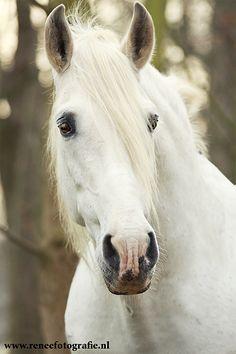 Dreamhorse by ~lifaya on deviantART
