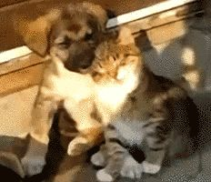 (gif) This is so cute!!!