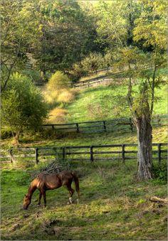 Ekster Antiques: Photos of Our Home & Farm