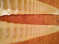 Bamboo Hot Dog Relish