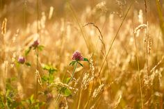 Sunset Clover by Kimber Leigh on 500px
