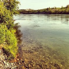 Yukon River, Whitehorse, Yukon. View from next to Trans Canada Trail #TCTrail Photo by ruthtaitphotos • Instagram