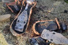 Boucles de ceinture médiévales réalisées pour la Villa gallo-romaine de Saint-Saturnin-du-Bois. Saint Saturnin, Bronze, Dog Tags, Dog Tag Necklace, Villa, Bracelets, Leather, Jewelry, Locs