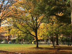 And it was all yellow... @oregonstateuniv