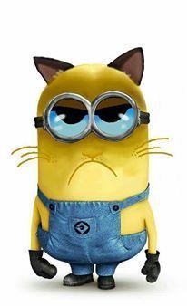 Grumpy Cat Minion.  Love it!