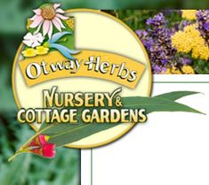 Otway Herbs Terrace Garden, Herb Garden, Herb Farm, Forest View, Coastal Gardens, Unusual Plants, Insect Repellent, Medicinal Herbs, Massage Oil