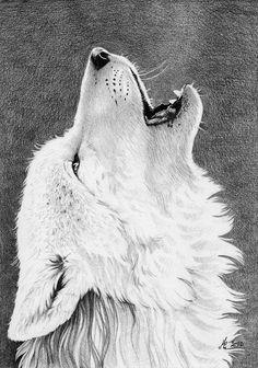 Imagini pentru black and white wolves drawing