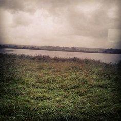 Rainy reedbed at RSPB Minsmere