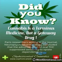 #weedstagram #highsociety #ganja #cannabiscommunity #hippie #dabs #stoner #marijuana #weed #highlife #thc #dank #cannabis #hightimes #kush Marijuana Plants, Cannabis Growing, Medical Information, Cancer Cure, Smoking Weed, Health Facts, Medical Marijuana, Natural Medicine, Gardens