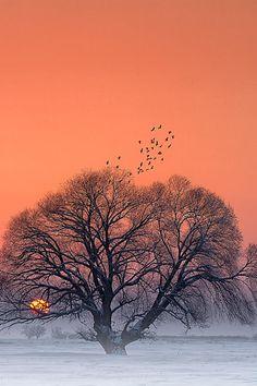 Tree of Life ~ By Bagedar