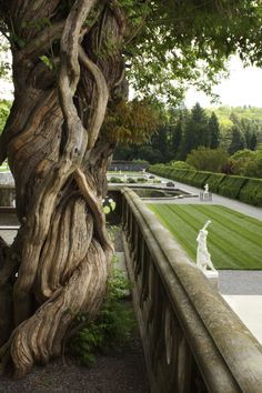 NC: Twisted Tree at the Biltmore Estates, Asheville, NC