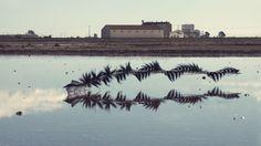 Vogelflug mit Chronofotografie