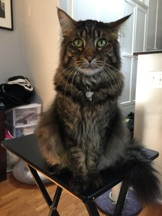 When writer Carrie Borzillo's new boyfriend moved in, she was excited for a new man in her bed. Her cat Aidan had other ideas.