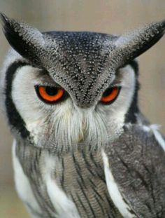 Kinda looks like when Ursula turns King Triton into that worm thing in The Little Mermaid. Friggen cool owl though.
