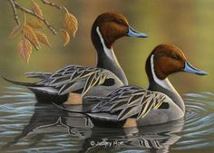 Past Original Waterfowl Paintings by Jeffrey Hoff 7