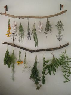 "tulullabelle: "" my new drying set up! slowly harvesting the herb garden """