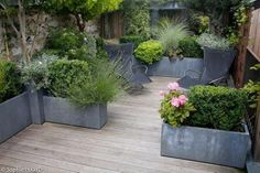 Beautiful courtyard or terrace garden planted in light weight zinc finished planters