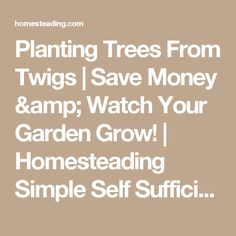 Planting Trees From Twigs | Save Money & Watch Your Garden Grow! | Homesteading Simple Self Sufficient Off-The-Grid | Homesteading.com
