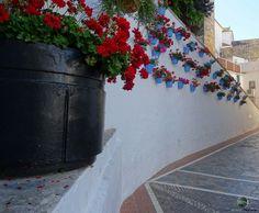 Blumenmeer Sony, Sidewalk, Floral, Walkways, Pavement, Curb Appeal