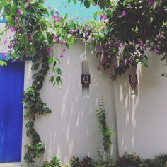 Sunsets & Amigos in Cartagena Colombian Cities, Sunset, Plants, Friends, Cartagena Colombia, Sunsets, Planters, Plant, Planting
