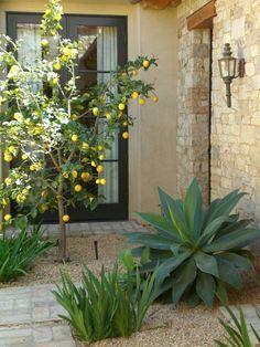 Jardin méditerranéen citronnier pierres décoratives Plantes