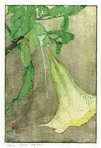 Edna Boies Hopkins (American, 1872-1937), Datura, ca. 1909, Color woodblock print