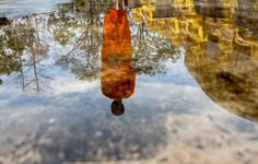 The water reflection of a Buddhist monk at Vat Chomphet.   Justin Mott for The New York Times
