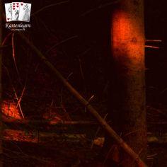 In der Abenddämmerung finden sich warme Farben an den Baumstämmen. Legt man seine Hand darauf und geht nahe an den Baum ran, kann man manchmal das Raunen der Bäume vor der Nachruhe hören.  Wenn nicht: befrag die Karten am Orakelsee. Der ist neu auch von unter der Wasseroberfläche besuchbar.  #kartenlegen #bäume Cartomancy, Warm Paint Colors, Legends