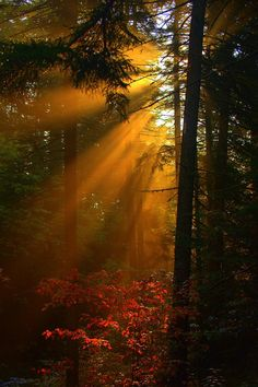 Sun rays peeking through the branches.....