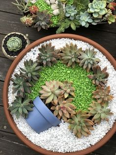 Succulents garden - Deco trend Small colorful DIY succulent flower garden pot in a pot – Succulents garden Succulent Gardening, Garden Terrarium, Succulent Terrarium, Terrarium Wedding, Organic Gardening, Flower Gardening, Vegetable Gardening, Gardening Tips, Container Gardening