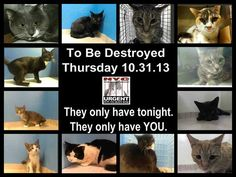 Pets on Death Row - Urgent Death Row Cats's Photos - Pets on Death Row - Urgent Death Row Cats
