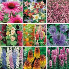 Landscaping ideas home interior design ideashome interior design - 1000 Images About Perennial Flowers On Pinterest