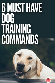 Dog obedience training helps you keep your dog safe and makes life with your dog more enjoyable. Check out these must have dog training commands and tips on how to teach your dog or puppy. #dogtraining #obedience #dogs