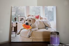 Love love love this dog portrait on #canvas from #easycanvasprints
