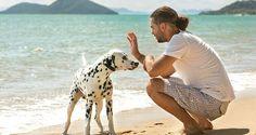 "Cave creek dog training ""k9katelynn"" dogs afraid of men"" see more paradise…"