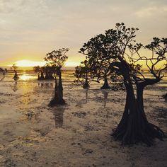 Peace and Quite . . Location : Walakiri Beach, Sumba  by : @ettasekar . . #sumba #visitsumba #pulausumba #ExploreSumba #pantaiwalakiri #walakiribeach #opentripsumba #tripsumba #tukangjalantrip #PesonaIndonesia #exploreindonesia #WonderfullIndonesia #ExploreNusantara #Liburan #liburanseru #liburanmurah  #Traveling #Travel #Tour #Tukang_Jalan #tukangjalan #folkindonesia #kelilingindonesia #sunset #sunsetbeach