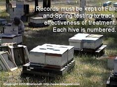 Records must be kept every Fall and Spring, to track effectiveness of organic formic acid treatment.  Therefore, each hive is numbered.