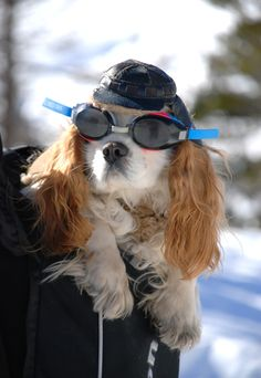 Seen on the ski slopes of France. Monsieur Puppy ready to ski.  Hope he's wearing his Terramar hottotties.