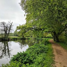 The #Riverwey is beautiful even on a grey day. #Surrey  Where's your favourite walk?