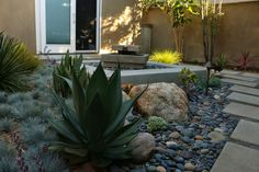 mid-century modern drought tolerant landscaping