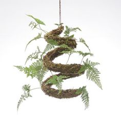 Shade Garden, Garden Plants, House Plants, Small Terrarium, Terrariums, Diy Hanging Planter, Hanging Plants, Unusual Plants, Cool Plants