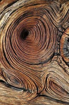 Wood wrinkles - beautiful. Source: http://www.flickr.com/photos/sheenjek/3826931565/in/faves-splintered-arts/