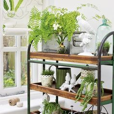 Pretty Shelf With Plants And Bird Statues.